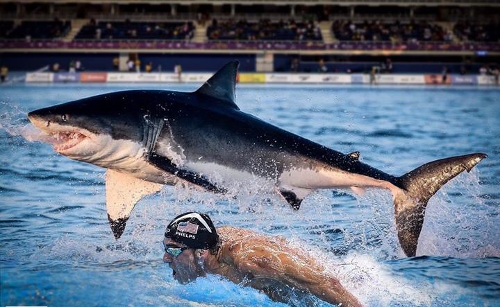 Майкл Фелпс проиграл в заплыве большой белой акуле. Фото Sports Illustrated