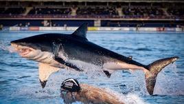 Фелпс против акулы и другие сражения человека с животными