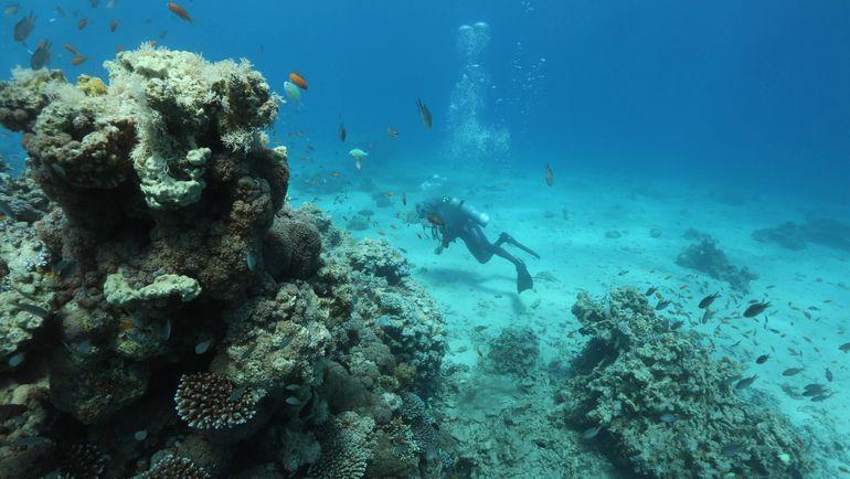 Погружение у коралловых рифов. Фото REUTERS