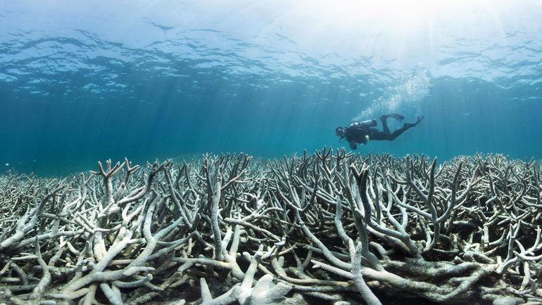 Дайвер у австралийских рифов.