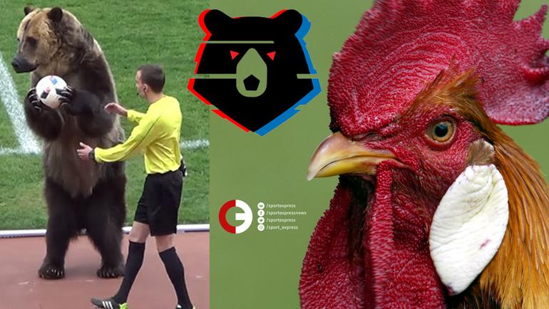 """Российский футбол - в мире животных. Фото """"СЭ"""""""
