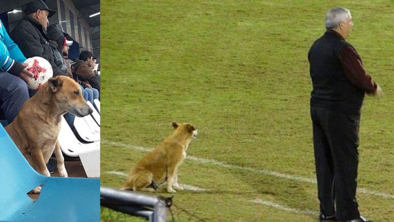 """""""Король футбола"""". В Парагвае собака стала помощником главного тренера"""