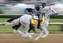 Лошади в Луисвилле