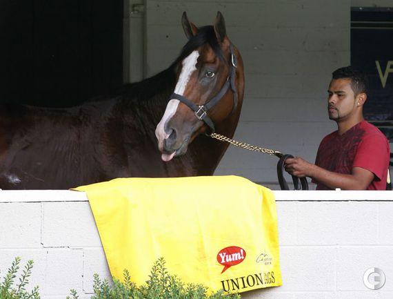 Лошади в Луисвилле. Фото REUTERS