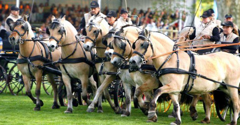 """Полцарства за коня Фото """"СЭ"""""""