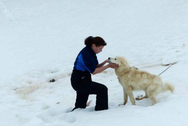 """Кинолог Светлана СТЕПИНА проводит работу по отбору собак для второй части экспедиции """"Карелия – Северный полюс – Гренландия"""". Фото """"СЭ"""""""