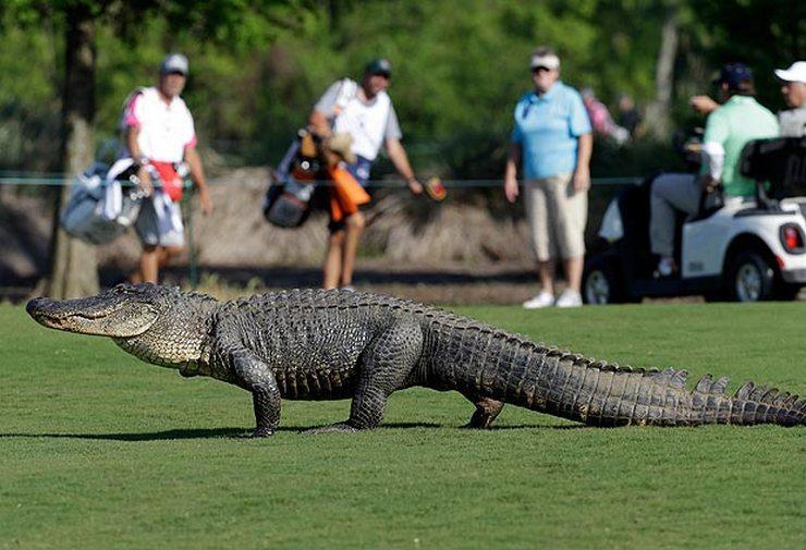 Крокодилы тоже выходили погулять.