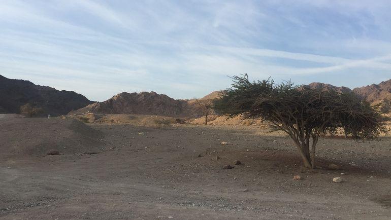 "Пятница. Эйлат. Пустынный марафон. Фото ""СЭ"""
