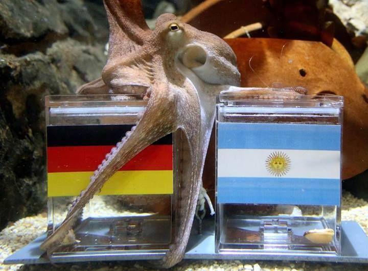 Новый Пауль предсказал победу Германии над Аргентиной в финале ЧМ (Фото) - изображение 1