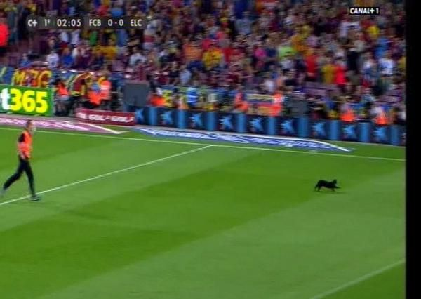 Черная кошка остановила на минуту матч Барселона - Эльче - изображение 1