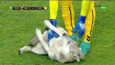 Собака выбежала на поле в матче