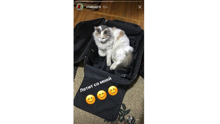 Виталий ДЕНИСОВ прихватит на сборы кота. Фото instagram.com