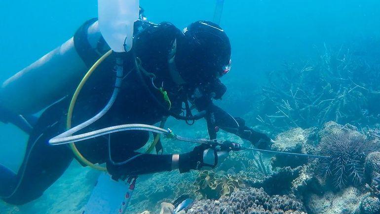 Дайвер у кораллового рифа. Фото REUTERS