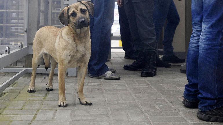 Перед чемпионатом мира в России истребляют бездомных животных? Фото Александр ФЕДОРОВ, «СЭ»