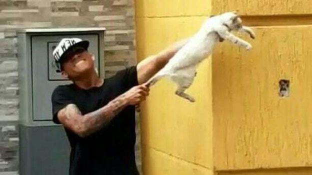 """Футболисты """"Сулии"""" жестоко обращались с животным. И были за это наказаны. Фото instagram.com"""