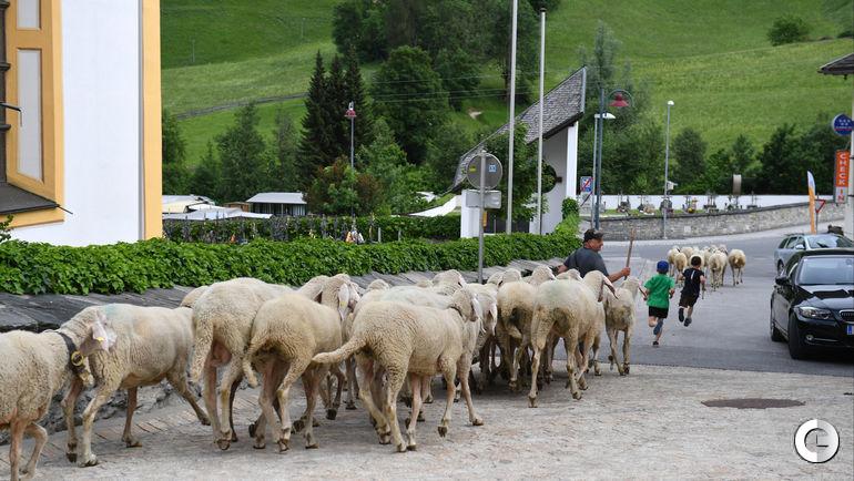 31 мая. Нойштифт. Австрийский город продолжает жить своей жизнью.