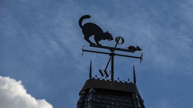 Верны ли кошачьи прогнозы? Фото AFP