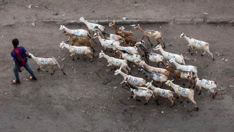 """Турецкий клуб """"Гюлспор"""" продал футболистов, чтобы купить коз. Фото AFP"""