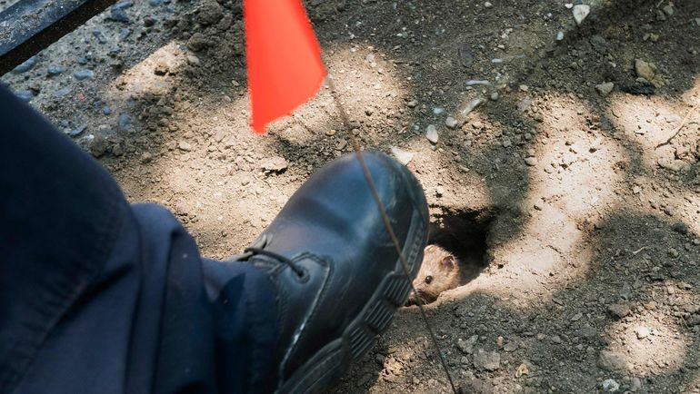 Пока Гари Маббат спал, крыса сгрызла до кости его большой палец и часть ступни. Фото AFP