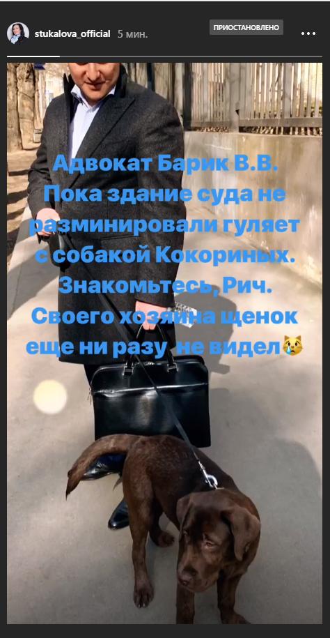 Адвокат Барик гуляет с собакой Кокорина. Фото Инстаграм Татьяны Стукаловой