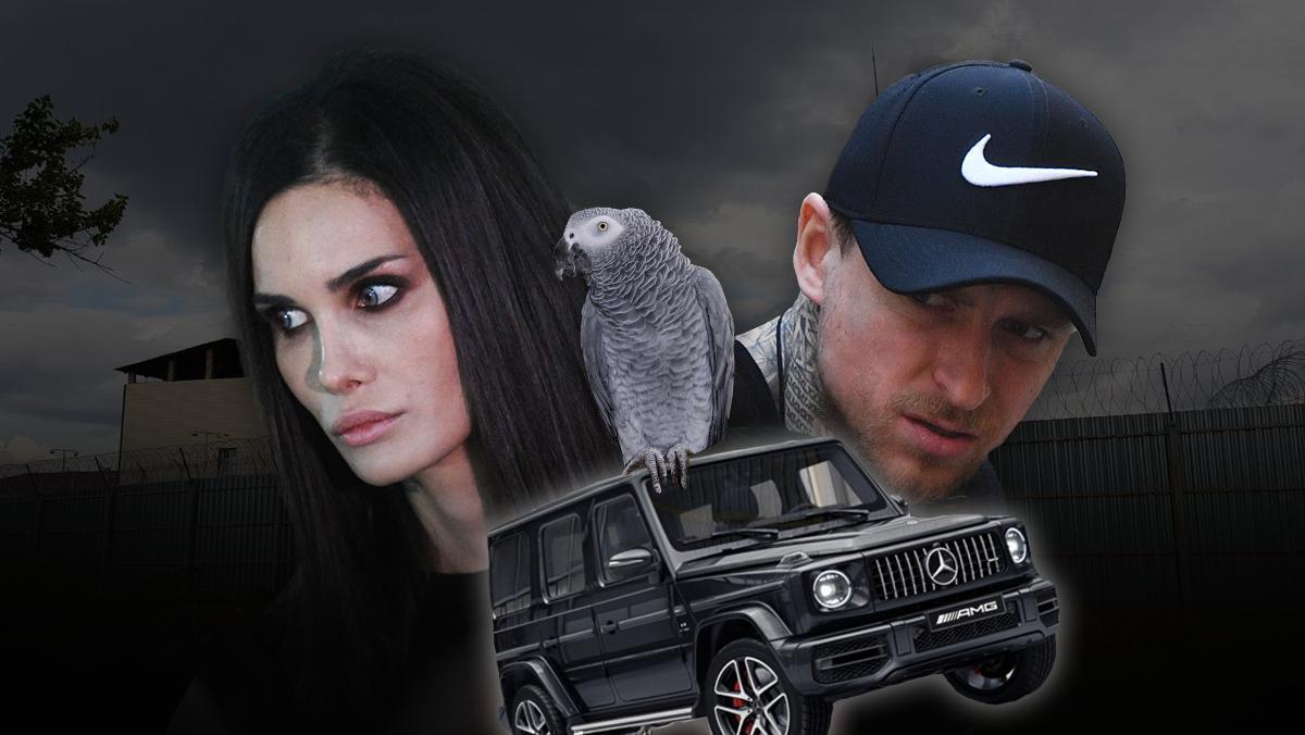"Попугай, ""Гелик"", шантаж. Скандалы семьи Мамаевых"