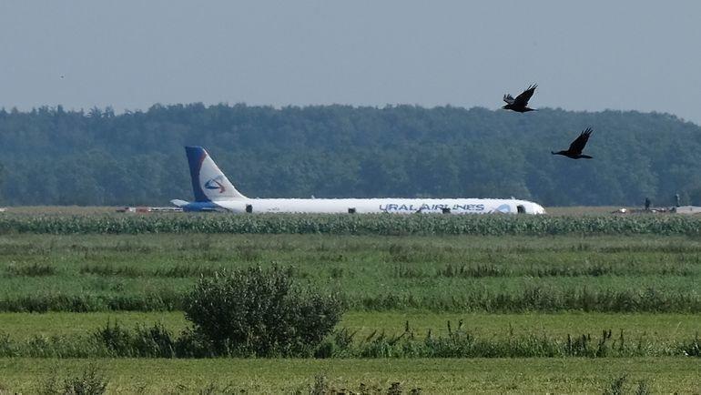 15 августа. Жуковский. Airbus A321 вполях кукурузы. Фото AFP