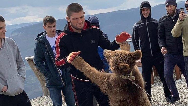 Зоозащитники ополчились наХабиба Нурмагомедова заиздевательства над медведями