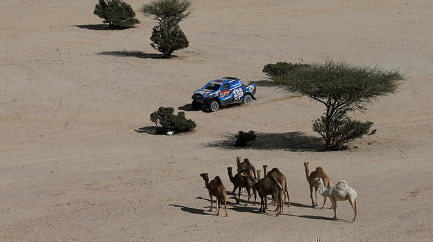 Верблюды натрассе этапа «Дакара». Фото Reuters