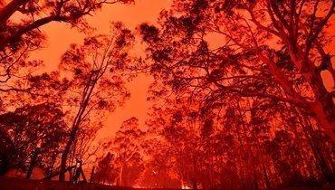Помешаютли пожары вАвстралии проведению теннисного турнира Australian Open?