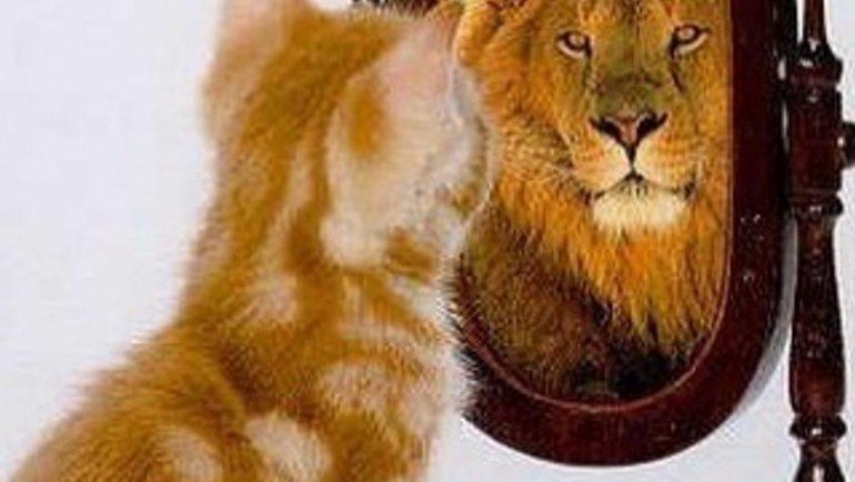 Взеркале— лев, вжизни— котенок. Слуцкий— про Дзюбу. Фото instagram.com/leonid.slutsky/