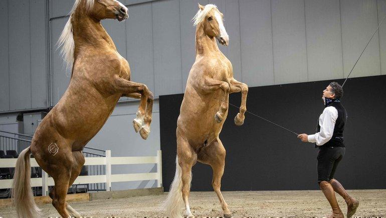 ВСША тренеров иветеринаров обвиняются ввведении допинга лошадям. Фото AFP