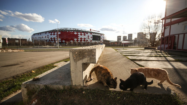 Коты, брошенные паровоз итанк: кто вовремя карантина остался жить настадионах Москвы