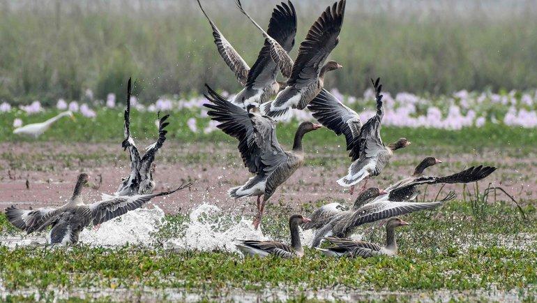 Английские зоозащитники бьют тревогу. Фото AFP