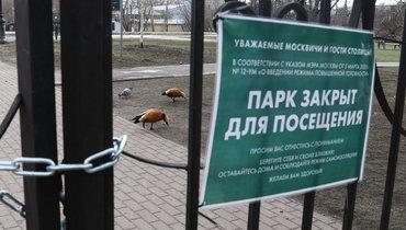 Экс-врач «Спартака»: «Почему закрывают парки илесопарки? Почему просто нельзя выйти подышать воздухом?»