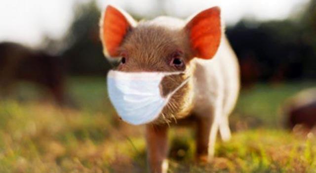 Ученые опасаются вспышки нового вируса. Фото BBC.