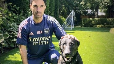 Артета купил собаку за20 тысяч фунтов. Онопасается потенциальных злоумышленников