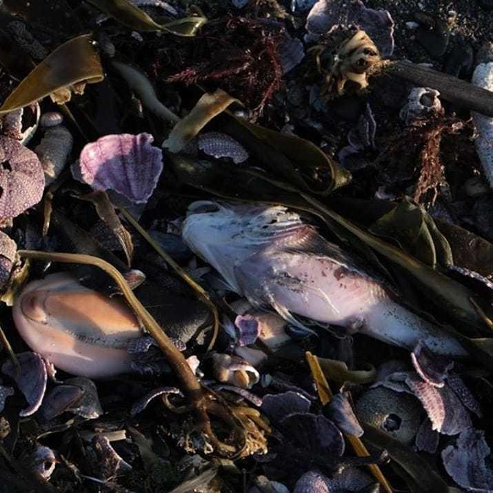Морские животные, выброшенные наберег из-за загрязнения воды наКамчатке. Фото Instagram
