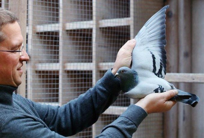 Николас Гисельбрехт и голубка-рекордсмен Новая Ким. Фото Reuters