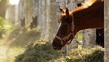 Одна изсамых невероятных допинговых историй этого года— сучастием лошади.