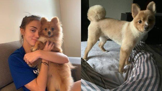 Фотографии собаки Волковой до и после стрижки. Фото Telegram-канал Вероники Волковой.