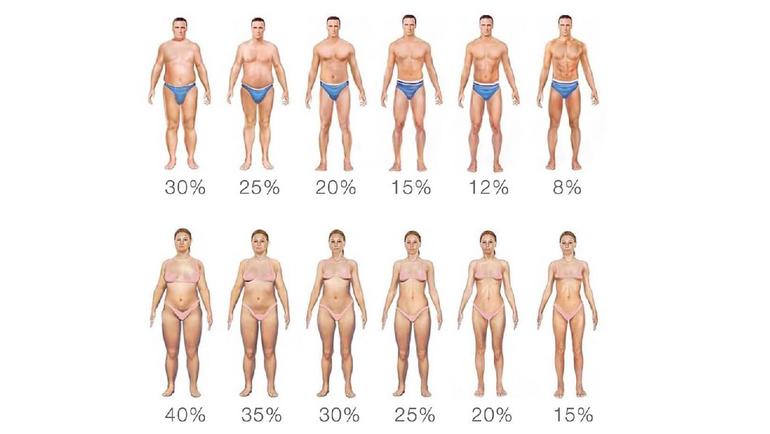 Средний процент жировой массы.