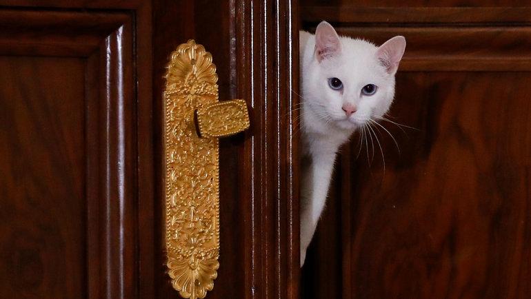 Эрмитажный кот Ахилл. Фото Reuters