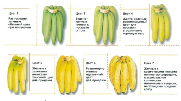 Польза ивред бананов.