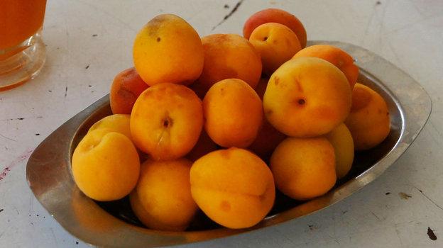 Как часто можно есть абрикосы? Фото AFP
