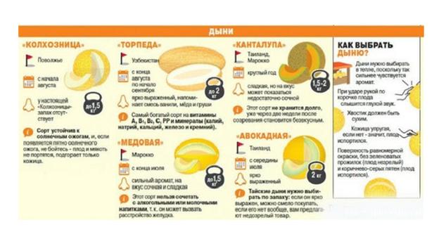 Как правильно выбрать спелую и сладкую дыню? Фото СВ-АСТРУР