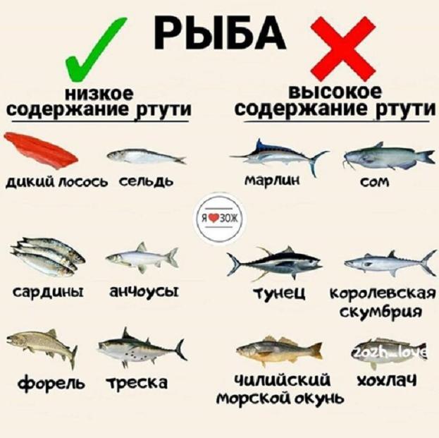 Какая рыба самая полезная. Фото Яндекс.Дзен