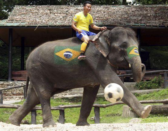 Верхом на слоне. 10 сумасшедших вариантов игры в футбол Фото www.telegraph.co.uk