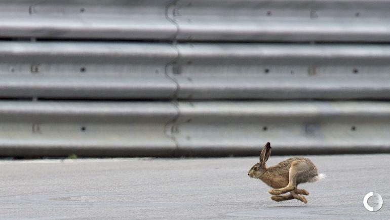 """Заяц на трассе не помешал Росбергу выиграть """"Гран-при Австрии"""""""