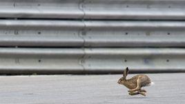 Заяц на трассе не помешал Росбергу выиграть